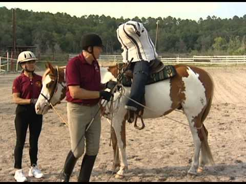 Top 5 Horse Training Tips |Horse Training