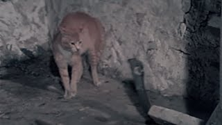 Cat fights snake - this is what a cat will do to defend her home