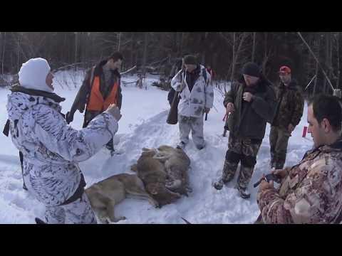 Охота на волков 15 02 20