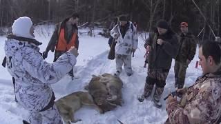 Охота на волков февраль 2020