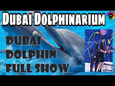 Dubai Dolphin Show at Creek Park – Full Show Nov 2019   عرض دولفين دبي في حديقة الخور