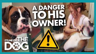Chaotic Boxer Dog is Putting His Sick Owner in Serious Danger | It's Me or The Dog