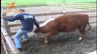 [Best Animal Fights]  [Wild Animal Attack]  Animals Attack humans Compilation  2016 hhhhhhhhhhhhhh