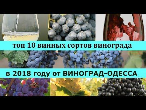 ТОП 10 ЛУЧШИХ ВИННЫХ СОРТОВ ВИНОГРАДА 2018 года ! ДАРИМ ПОДАРКИ В ВИДЕО! Лучшие винные сорта