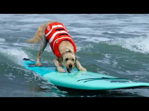World Dog Surfing Championships Goes Down Near San Francisco - 2018 [PICS]