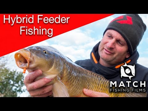 Steve Ringer's Winter Hybrid Feeder Fishing Tips