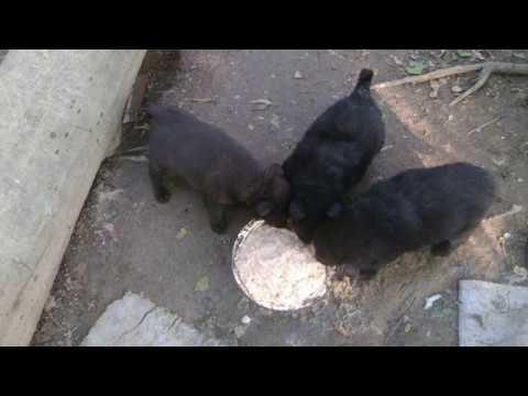 Отдам щенков в добрые руки 8-963-750-1728