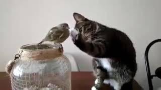 Lol😂 Funny crazy cats 😂