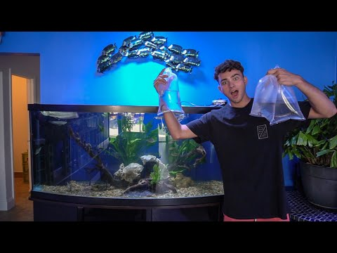NO ONE HAS THESE EXOTIC FISH!!