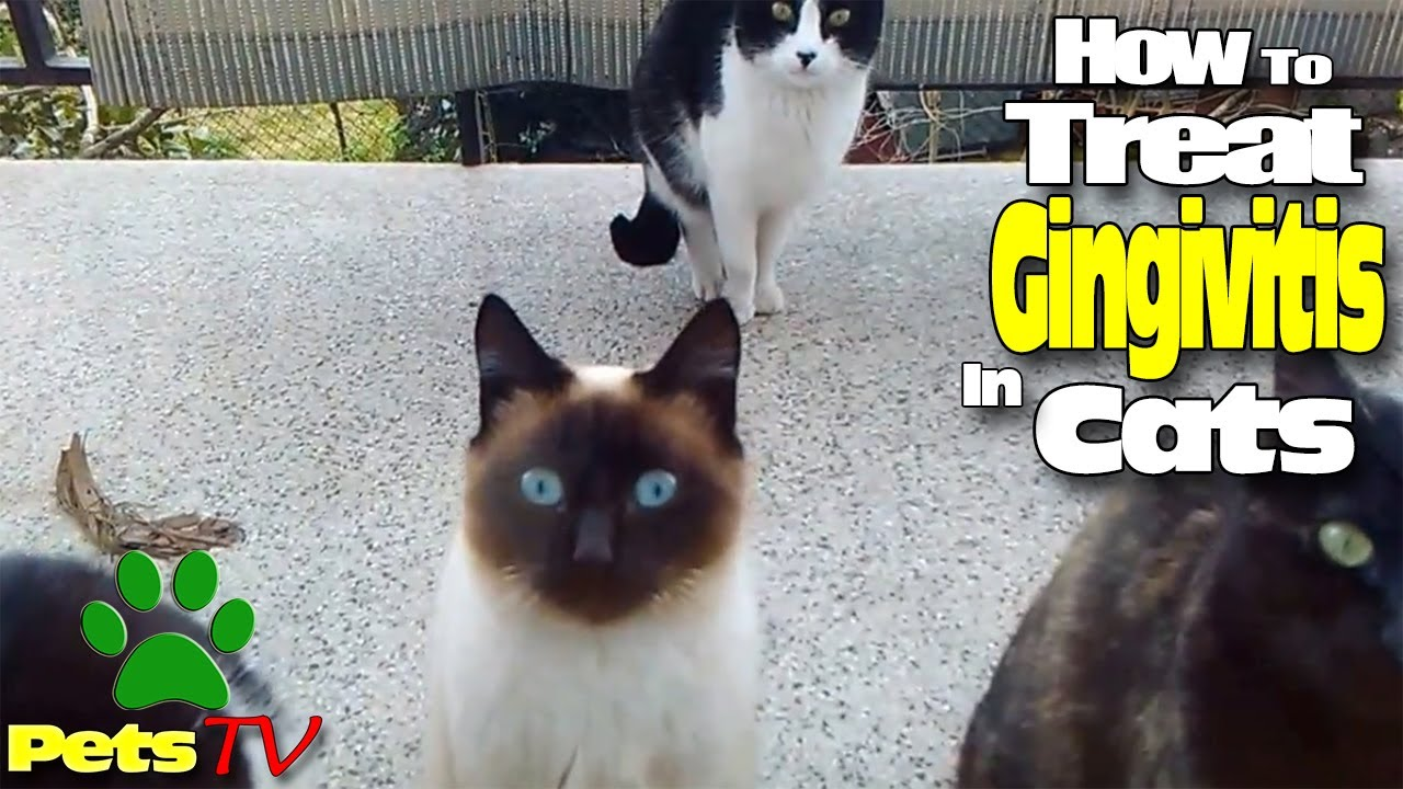 how to tell if cat needs glands expressed