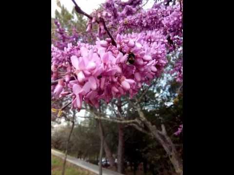 Primavera Al Parc Catalunya Sabadell Arbre Del Amor Youtube