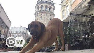İstanbul'un sokak sakinleri yardım bekliyor - DW Türkçe