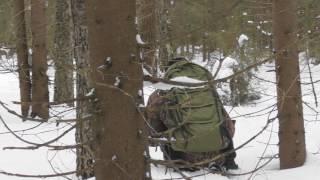 охота на рябчика/зимний лес