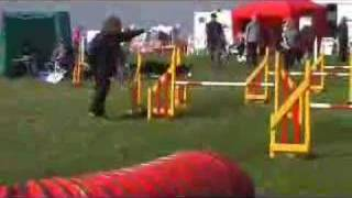 Bliss - Agility @ Dashin Dogs 2007 Uk