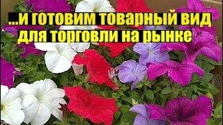 Ассортимент цветов в начале мая 2019. Обзор.