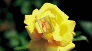 写真はMさんからお借りした「谷津バラ園」のきれいなバラ達です。 これ...