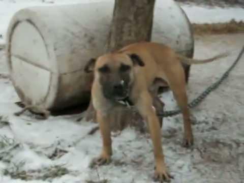 Wildside Kennels Dogs