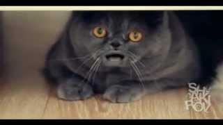 Поющий кот Сальвадор-2(, 2012-09-10T17:37:24.000Z)