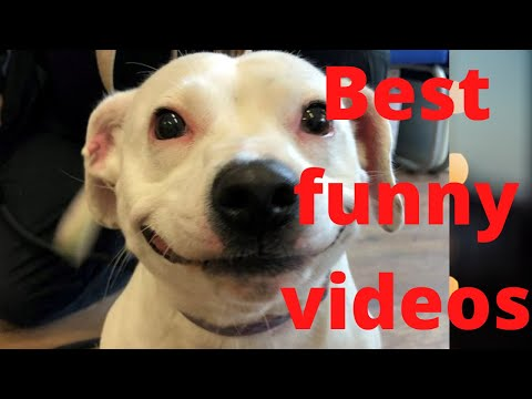 Best funny videos ever 2020|best funny |Cool Smash