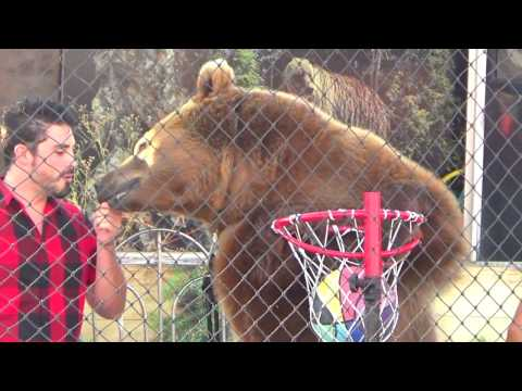 Welde's Big Bear Show At Florida State Fair 2017 (Day 781 - 2/17/2017)
