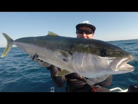 Spearfishing Sunny Coast – the regular grind