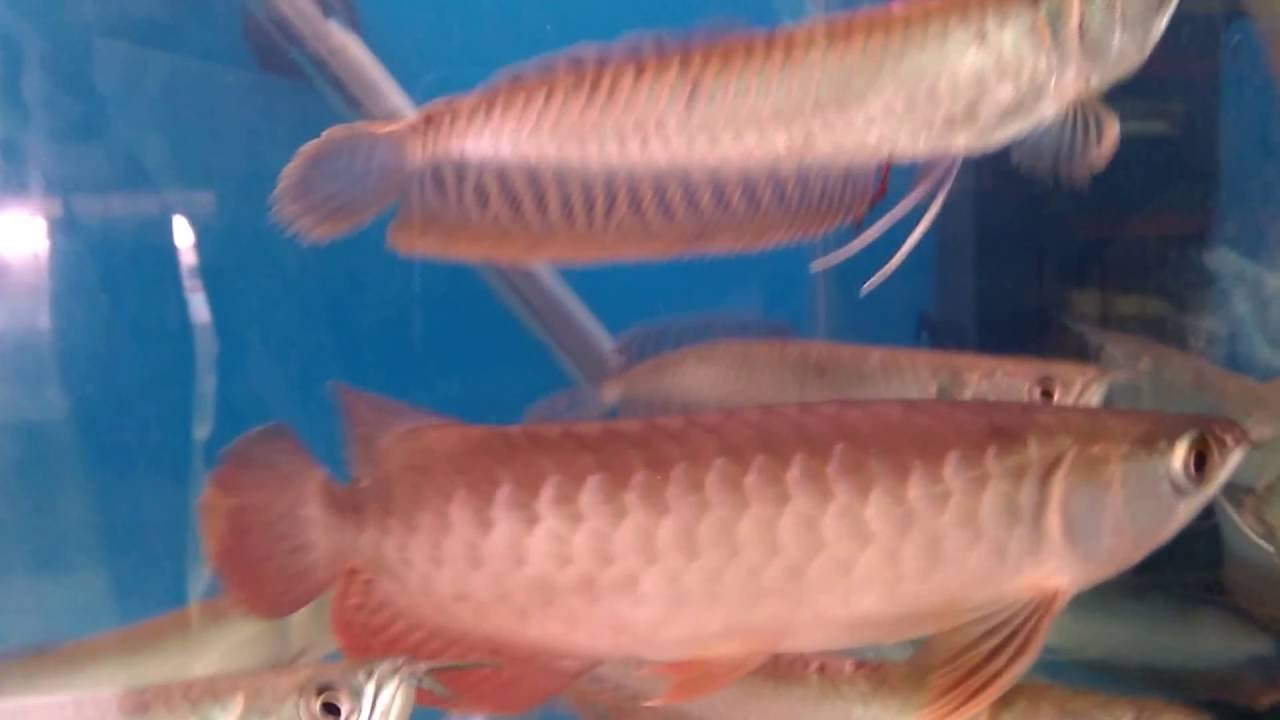 Fish aquarium in kurla - Kurla Fish Market Must Visit Place For Fish Lover