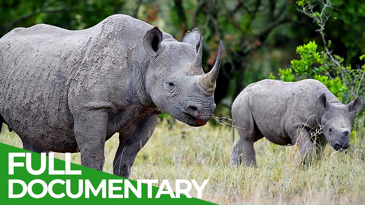 Do Rhinos Have a Future? | Giving Nature A Voice | Free Documentary Nature