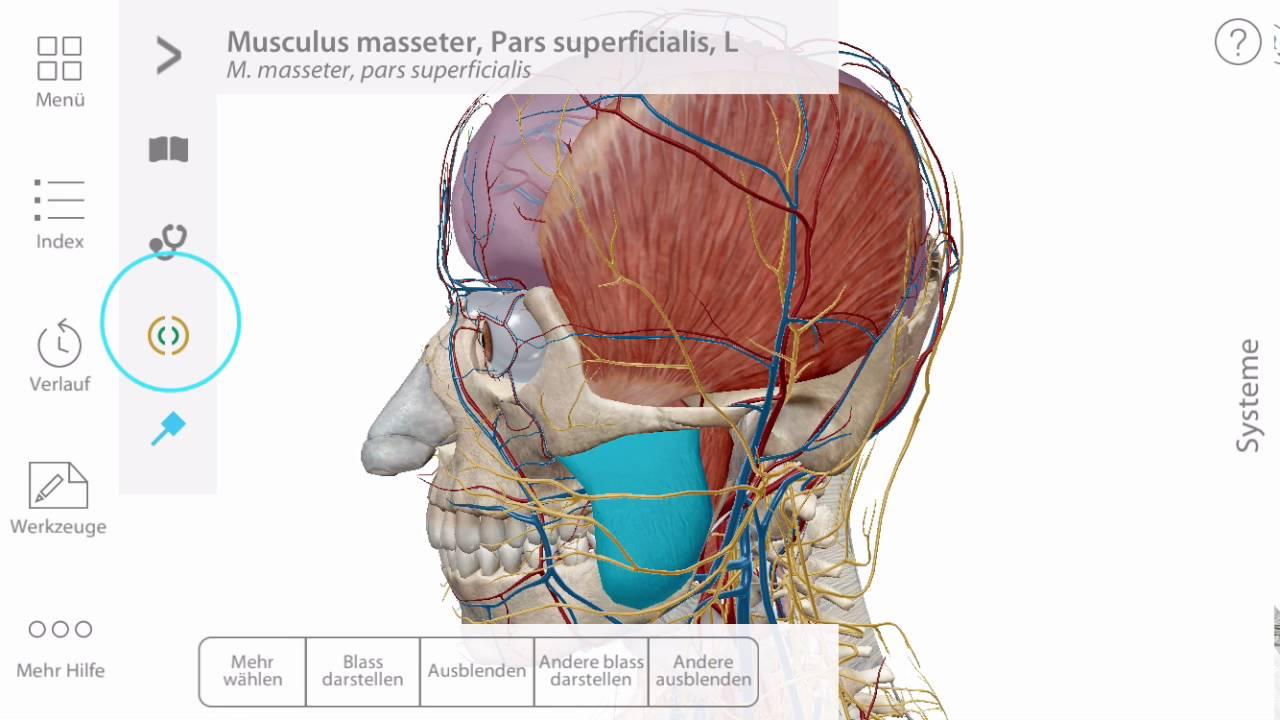 Anatomie hinzufügen und entfernen   Visible Body - YouTube