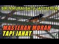 Masteran Murah Tapi Jahat Untuk Murai Batu  Mp3 - Mp4 Download
