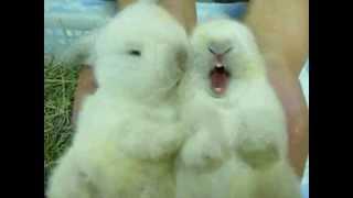 красивые кролики милашки весна 2012 ( Beautiful bunnies cuties