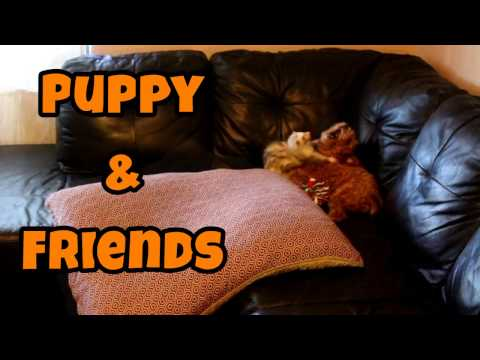 Puppy & Friends - Cute Animals Inside 4 - VOL. 46
