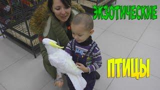 Видео для детей Попугаи и экзотические птицы выставка  Parrots exotic birds exhibition