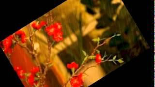 طمني عليك_ موسيقى -BY TAREK DEABES