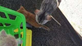 Война за котят