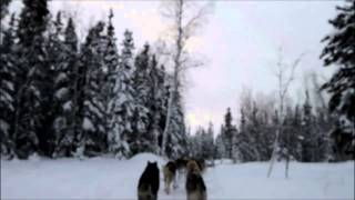 2013年2月カナダ・イエローナイフ・オーロラヴィレッジでの犬ぞり体験で...
