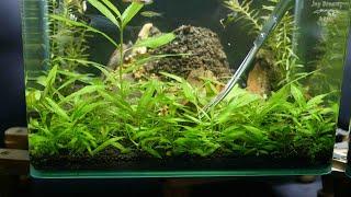 fish tank small a snowy mounta…