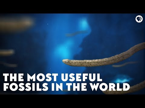 The Most Useful Fossils in the World