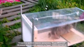 гуманный отлов кошек, кошеловка, ловушка для кошек