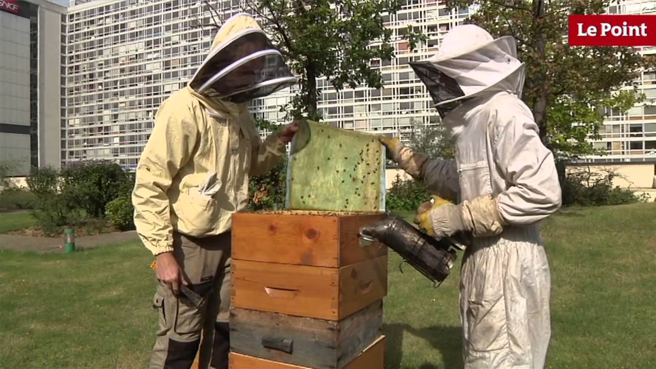 L 39 apiculture urbaine ou comment faire du miel en ville - Comment faire du miel ...