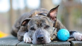 From Homelessness to Happiness : A Shelter Dog Finds Love