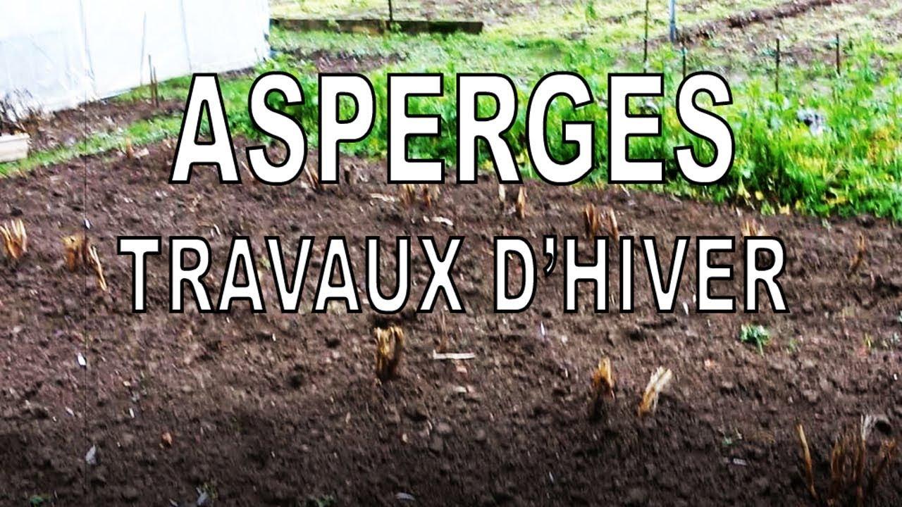 Comment Planter Des Asperges asperges bio, la culture de a à z