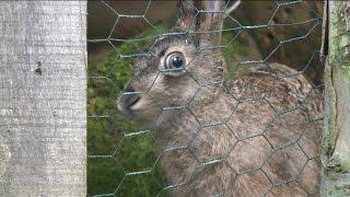 Mysikrólik  - Ośrodek Rehabilitacji Dzikich Zwierząt