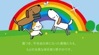 虹の橋 犬