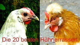 Die 20 besten Hühnerrassen für Selbstversorger - von Sulmtaler bis Lakenfelder - Hühner Zucht Film