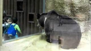 王子動物園Oji Zoo ウマグマTibetan-Bear 新しくなったクマ舎 小春日和...