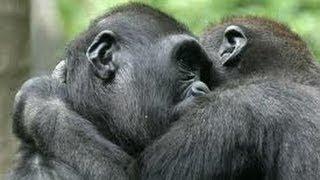 INCREÍBLE MOMENTO En que los monos son liberados