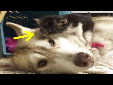 Heartbroken Kitten Wouldn't Even Eat  Until She Met This Dog WOW !