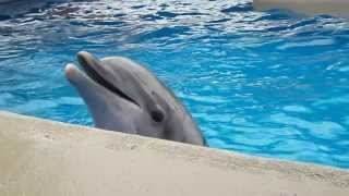 Dolphing doing tricks before get some Fish