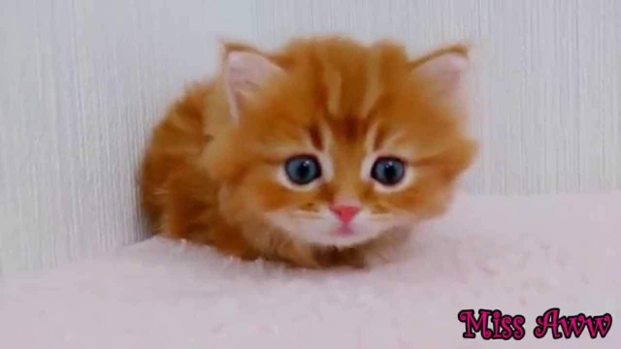 Grappige Dieren Video S Voor Kinderen Schattig Kitten