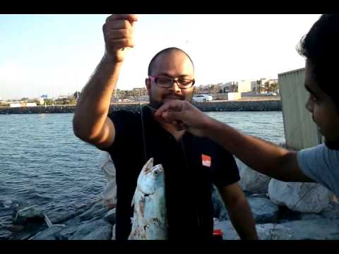 Ponnani jasbeerfish catch